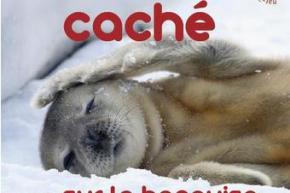 2013_Coucou_cache