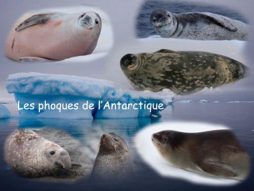 Conférence Les phoques de l'Antarctique