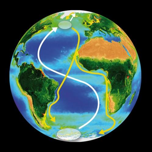 Carte des trajets de migration aller/retour de la sterne arctique