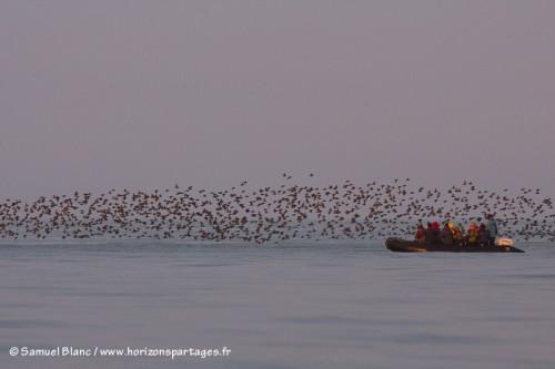 Zodiac et oiseaux à l'île Talan