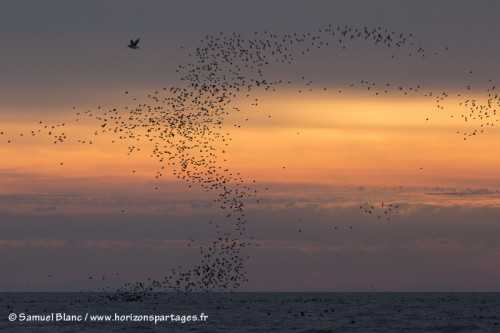 Oiseaux à l'île Talan au lever du soleil