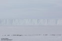 Manchot Adélie sur la banquise / Adélie penguins on sea ice