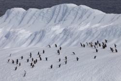 Iceberg et manchots / Iceberg and penguins