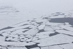 Dislocation de la banquise / Sea ice break up