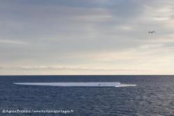 Banquise et manchots Adélie / Sea ice and Adéie Penguins