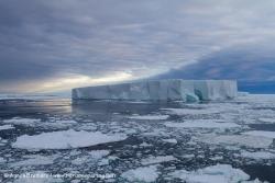Iceberg et banquise