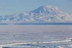 Banquise, Mont Discovery and manchots empereurs / Mount Discovery, sea ice and Emperor Penguins