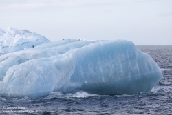 Iceberg et manchots Adélie