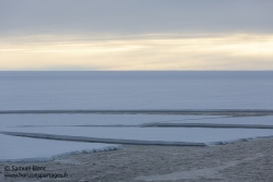 Banquise en disclocation / Break up of the sea ice