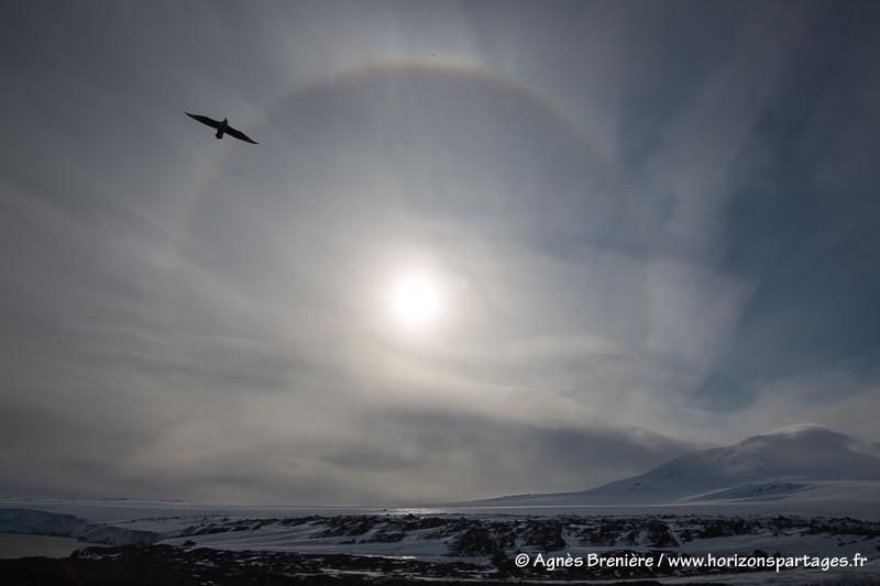Parhélie et labbe de McCormick / Sun dog and South polar skua