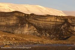Glacier couvert de cendres volcaniques et manchots à jugulaire / Glacier covered by ashes and Chinstrap Penguin