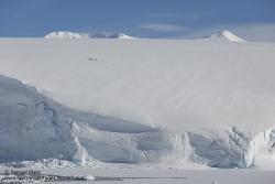 Manchots sur un glacier