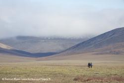 Ile Wrangel / Wrangel Island