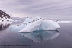 Iceberg et mouettes tridactyles
