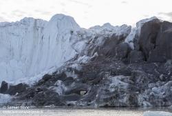 Ours polaire dans une moraine / Polar bear in moraine