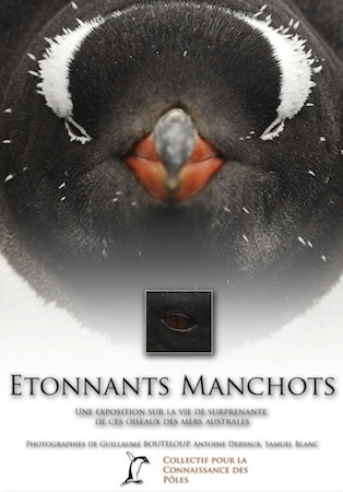 Exposition photos Etonnants manchots