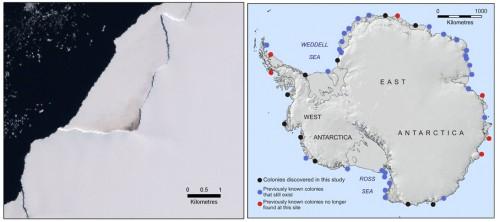 Cartes des colonies de manchots empereurs en Antarctique