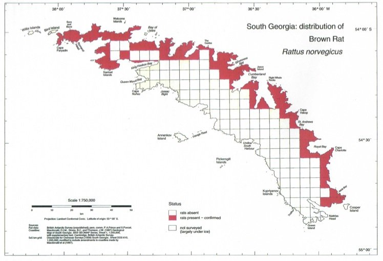 Carte de répartition du rat noir en Géorgie du Sud