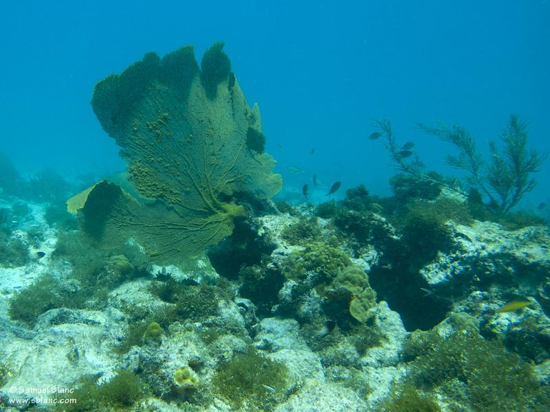 Vue sous-marine aux Tobago Cays