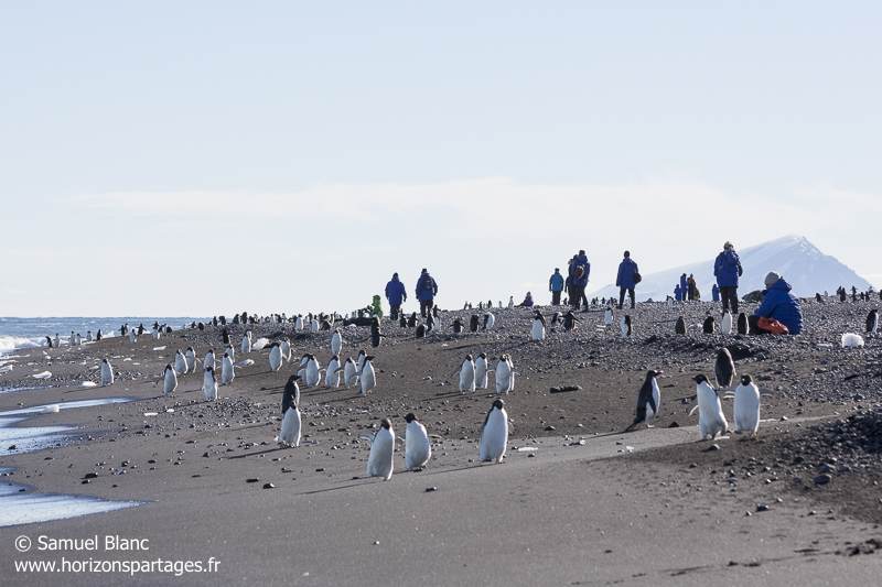 Touristes en mer de Ross, Antarctique