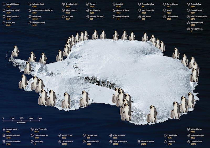 Carte des colonies de manchot empereur en Antarctique