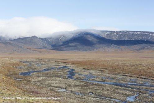 Ile Wrangel en Tchoukotka