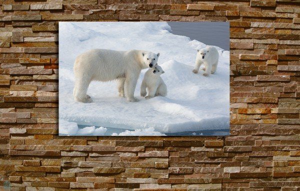 Tirage d'art ours polaires