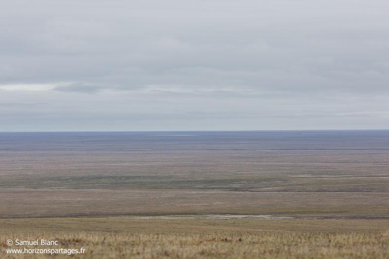Toundra de l'Akademy de l'île Wrangel