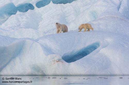 Ourse et son ourson sur un iceberg bleu au Spitzberg