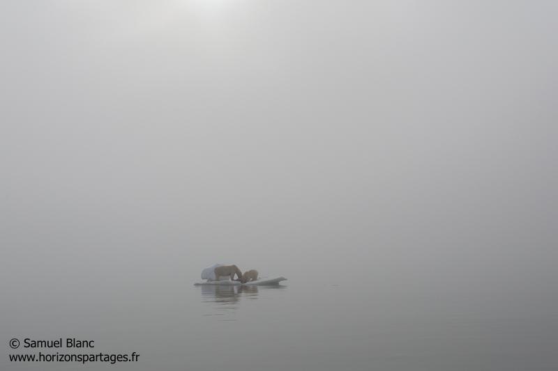 Ourse et ourson polaire sur la glace au Spitzberg