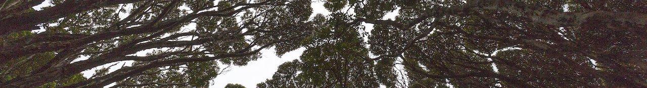 Forêt rata