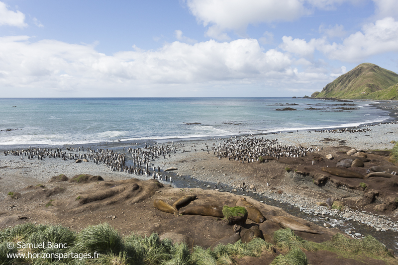 Sandy Bay à l'île Macquarie